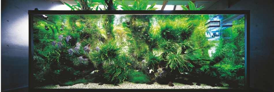 Akvarij u dnevnom boravku Takashi Amana