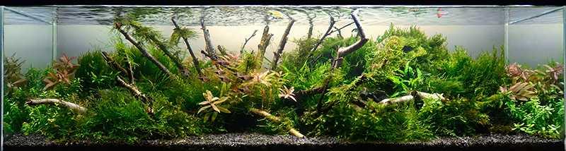 11. Prodz - Living room nature (120l)