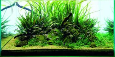 NAgoods-01_02_ Aqua Soil Malaya