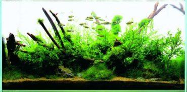 NAgoods-01_03_ aqua soil africana